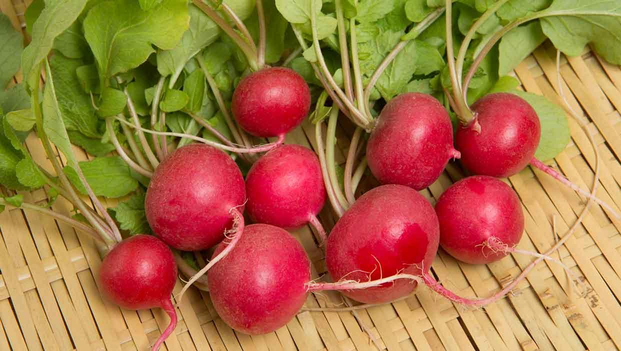 徳永さんのサラダが映える鮮やかな「サラダ紅かぶ」