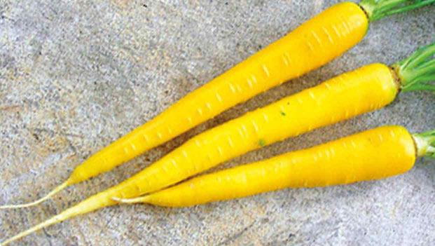 有機黄色いニンジン