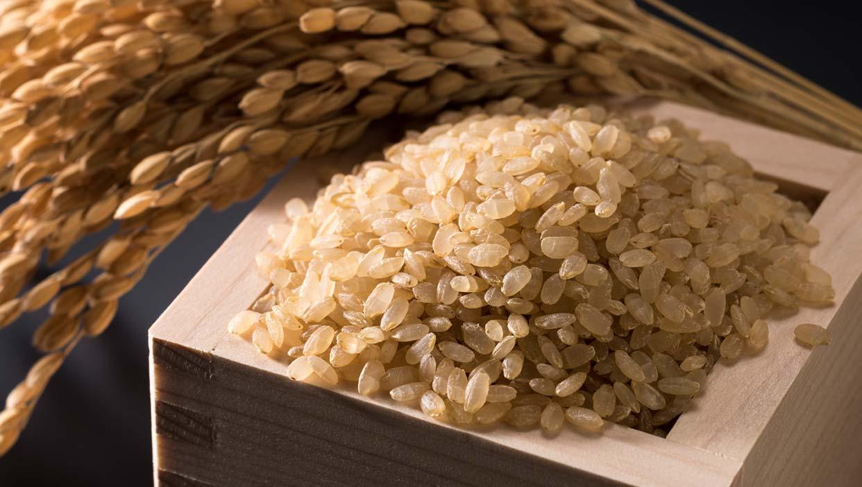安藤さんが盆ごろに稲刈りする「コシヒカリ(玄米)」