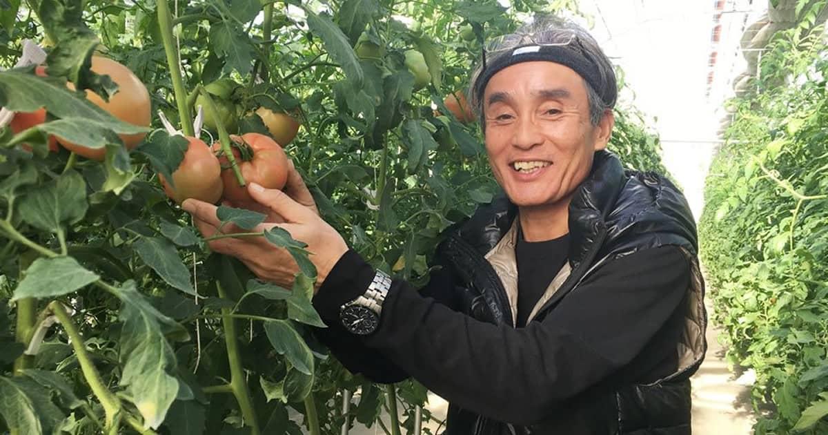 退職金をつぎ込んで50歳からの挑戦!最新鋭のトマトで勝負だ