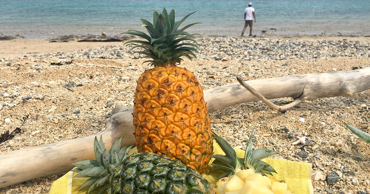 ハンサムパインがハンサムな理由は?沖縄で取材!完熟の甘~い秘密