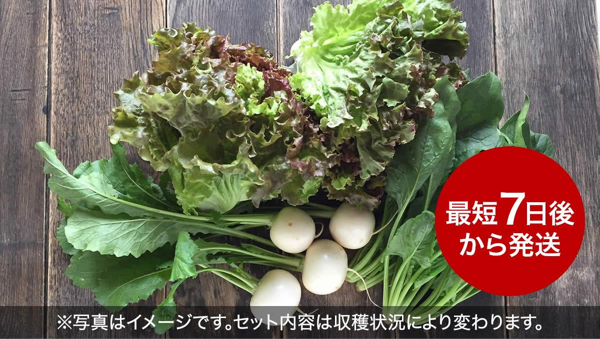 オーガニック野菜「お試しセット(5袋)」フルーツかぶと旬の野菜